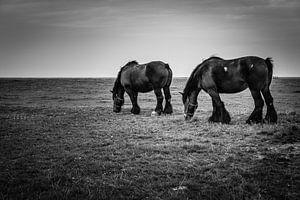 Horses in the marsh von Dick Frieling