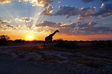 Giraffe bei Sonnenuntergang von Herman van Egmond
