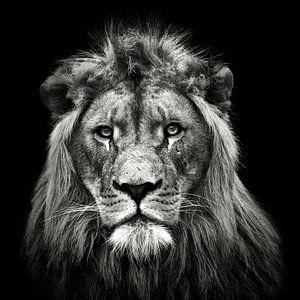 Jonge Mannelijke Leeuw, Christian Meermann
