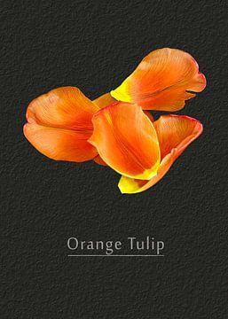 Tulpe von Leopold Brix