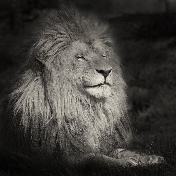 Lachende leeuw van Ellen van Schravendijk