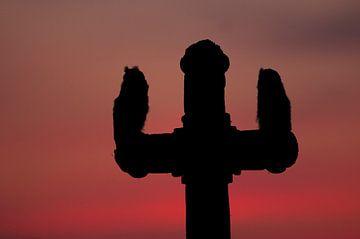 Silhouette van twee jonge Ransuilen op een houten kruis in Hongarije van AGAMI Photo Agency