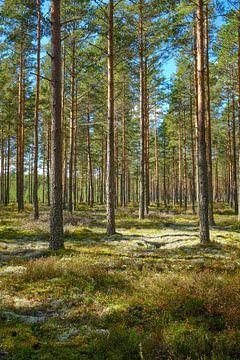 Zweden 267 van Geertjan Plooijer