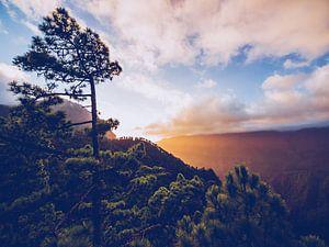 La Palma - Caldera de Taburiente van