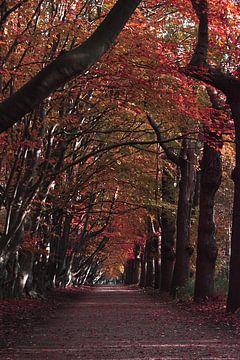 Herfst van Talitha Blok