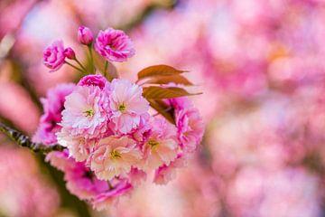 rosa Blüten am Zweig im Blütenbaum von Margriet Hulsker