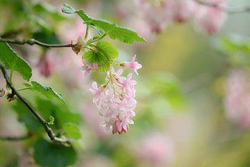 roze romantiek van Tania Perneel