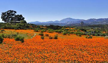 Bloemenzee Zuid-Afrika van Corinne Welp