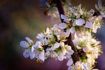 Blumenstrauß der Blüten von Joran Quinten