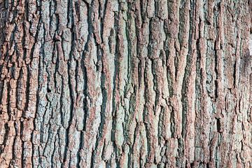 Close up bast van een boom von Dennis van de Water