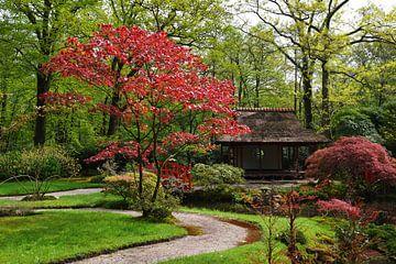 Japanse tuin von Georges Hoeberechts