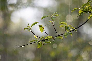 Frühling Regenschauer von Bas Ronteltap