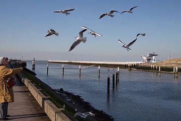 Vogeltjes voederen in Nieuwpoort von Ronald De Neve