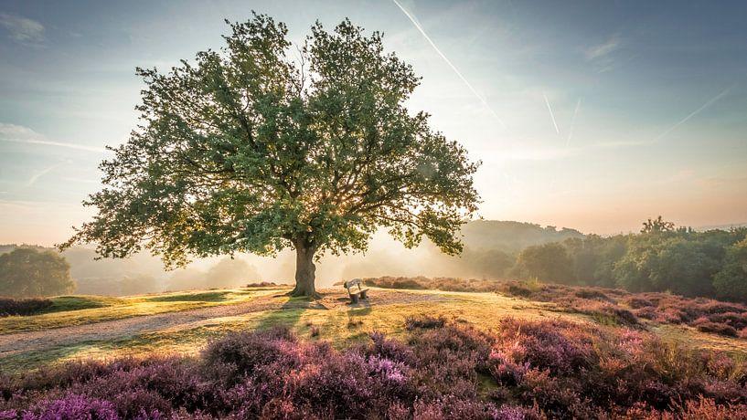 Bright sunrise behind a tree on the purple heath von Michel Seelen