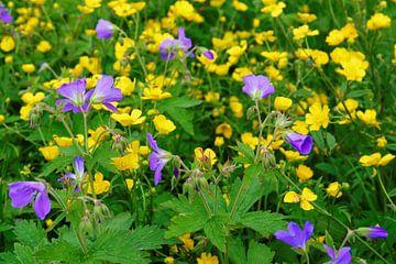 Kleurrijke bloemenweide van Gisela Scheffbuch
