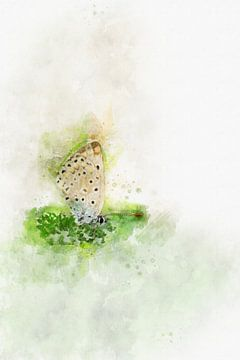 Papillon 1 sur Silvia Creemers