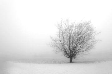 Eenzame boom von Annick Cornu