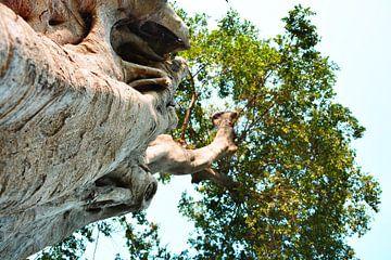 genieten van de heldere blauwe lucht vanuit de onderkant van de hoge boom sur Gerrit Neuteboom