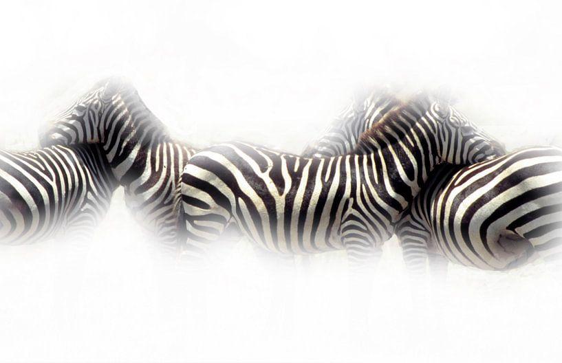 Zebra's van Ronald Jansen