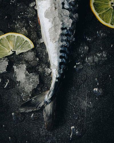 Makreel, 2018 von Sander van der Veen
