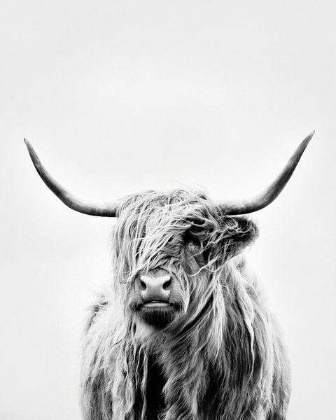 portrait of a highland cow van Dorit Fuhg