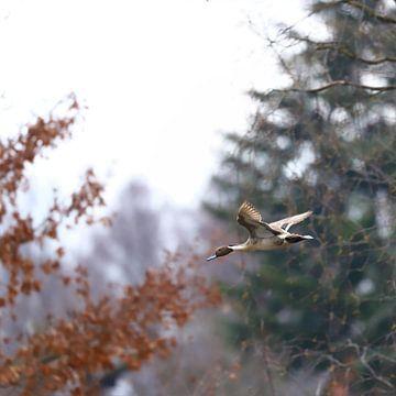 Entenbraten von Heike Hultsch