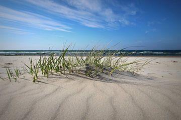 Dünen im Mai sur Ostsee Bilder