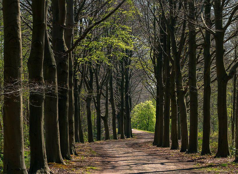 Bomenlaan in de lente van Bep van Pelt- Verkuil