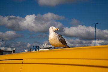 Meeuw op geel voertuig in de haven van Amrum van Alexander Wolff