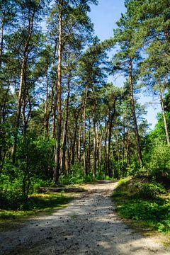Bos wandeling van Deborah Zannini