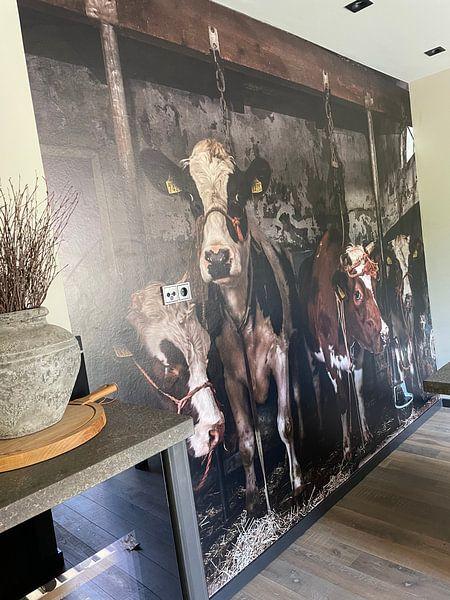 Photo de nos clients: Dutch cows in an old barn sur Inge Jansen