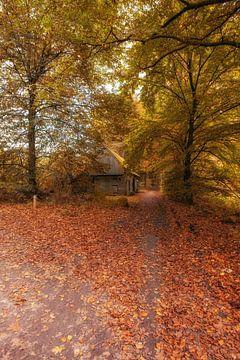 Autumnmood | De Bronnen | Ootmarsum van