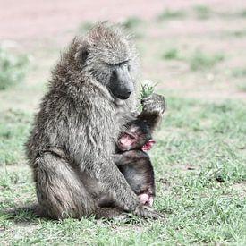 Pavian mit Kind von Robert Styppa