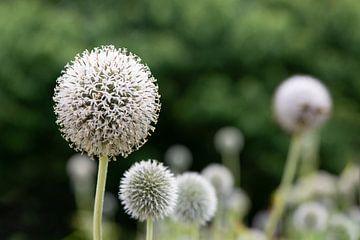 bloemen van Henriette Tischler van Sleen