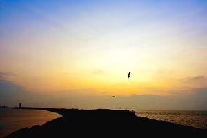 Pier van Wijk aan Zee met eenzame zeemeeuw