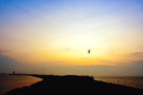 Pier van Wijk aan Zee met eenzame zeemeeuw van