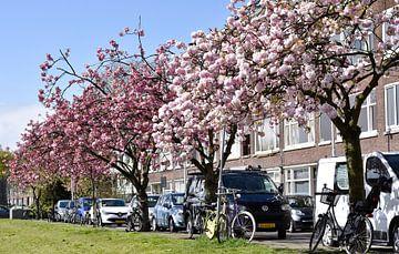Japanische Kirschblüte in Rotterdam von Charlene van Koesveld