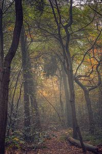Landschap - Mistig bos