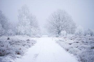 Winterlandschaft in der Heidelandschaft von Karijn Seldam