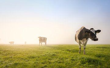 Koetjes in de mist van