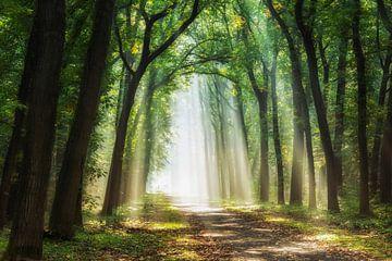 Strahlen des Lichts, Gelderland von Lars van de Goor