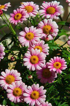 Blumenstrauß von Flowers by t.ART