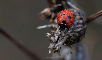 Rainy Ladybug van Nicole Harren