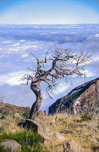Eenzame boom Pico Ruivo van