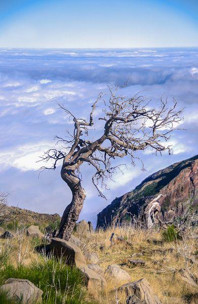 Eenzame boom Pico Ruivo van Eric van den Berg