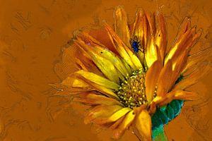 Vlieg op gele bloem