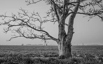 Die alte Weide von knollemanshoek von Timo Bergenhenegouwen