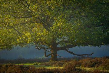 Eikenboom op de heide in het voorjaar van Tomas van der Weijden