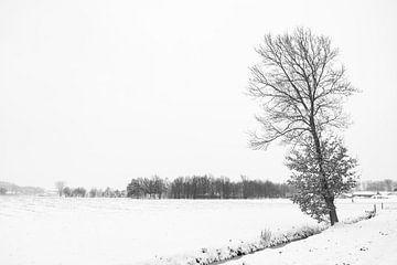 winterlandschap met een eikenboom aan de waterkant. von Lieke van Grinsven van Aarle