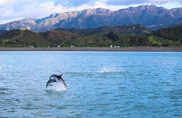 Springende Dolfijnen in Nieuw Zeeland van GoWildGoNaturepictures